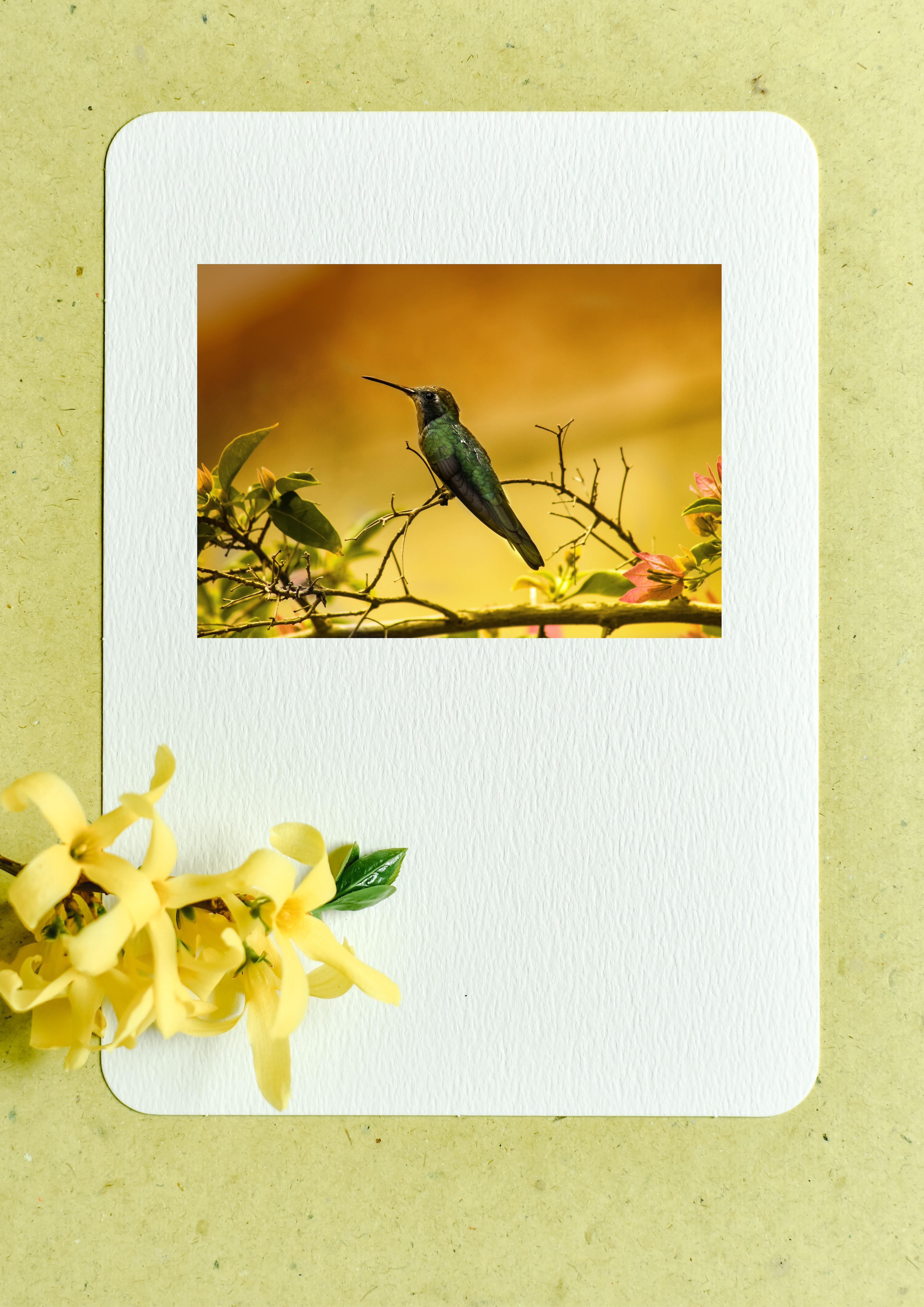 Le livre des plumes