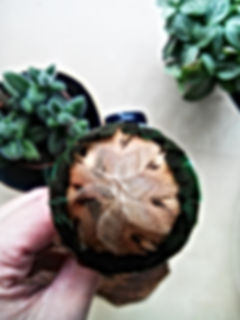 boule plume 3_analepse felt design.jpg