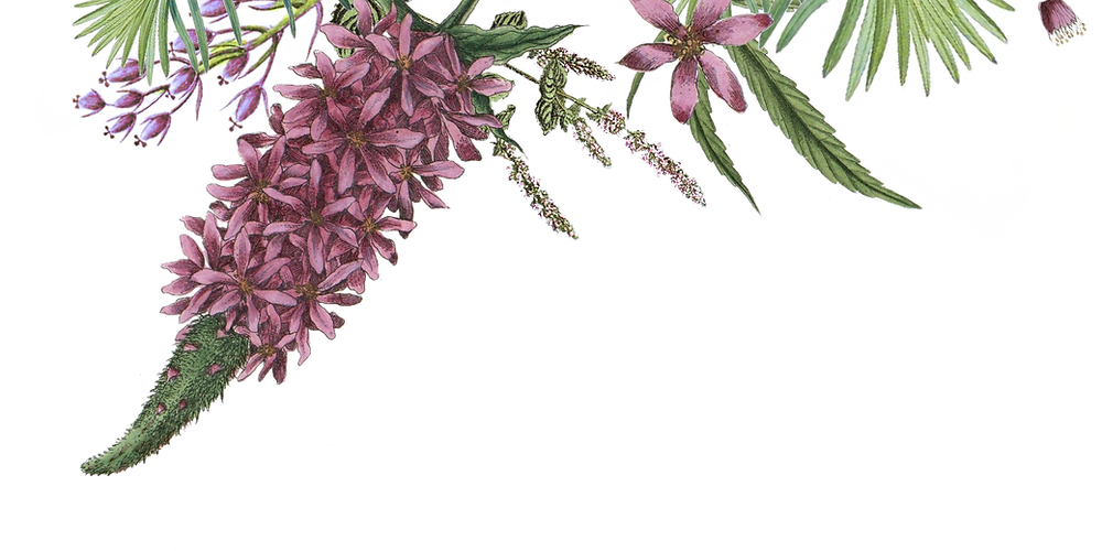 Illustrated Flowers 2