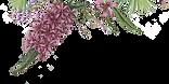 Fleurs illustrées 2