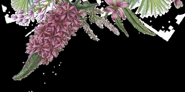 Illustrated Flowers 2