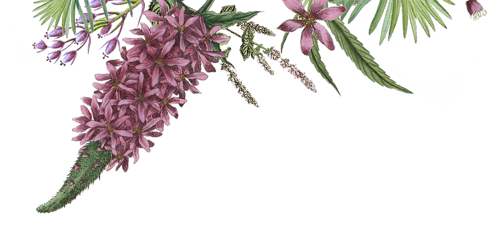 Geïllustreerde Bloemen 2