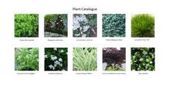 Plant Photos.png