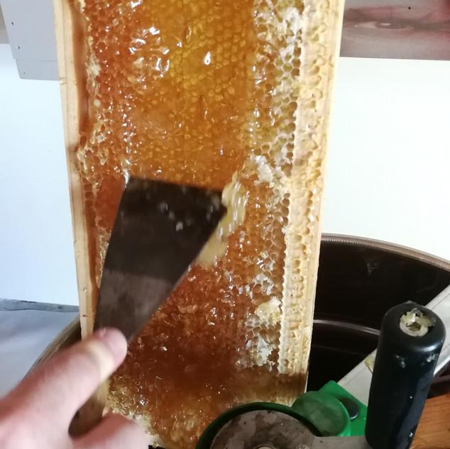 Extraction du miel, O Petit Bonheur, mai