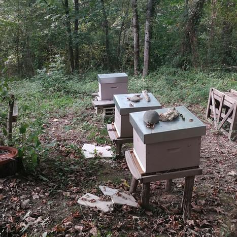 Des ruches pour la biodiversité dans les