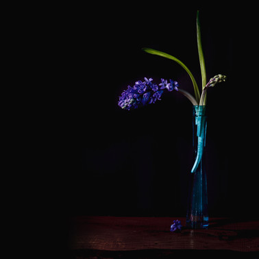 Embracing the beauty of hyacinth flower.