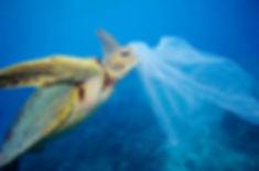 Turtle-Eating-Plastic-Bag_meitu_1.jpg