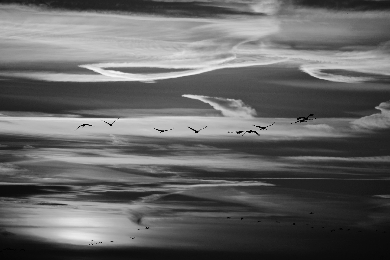 Vol de grue en fin de soirée