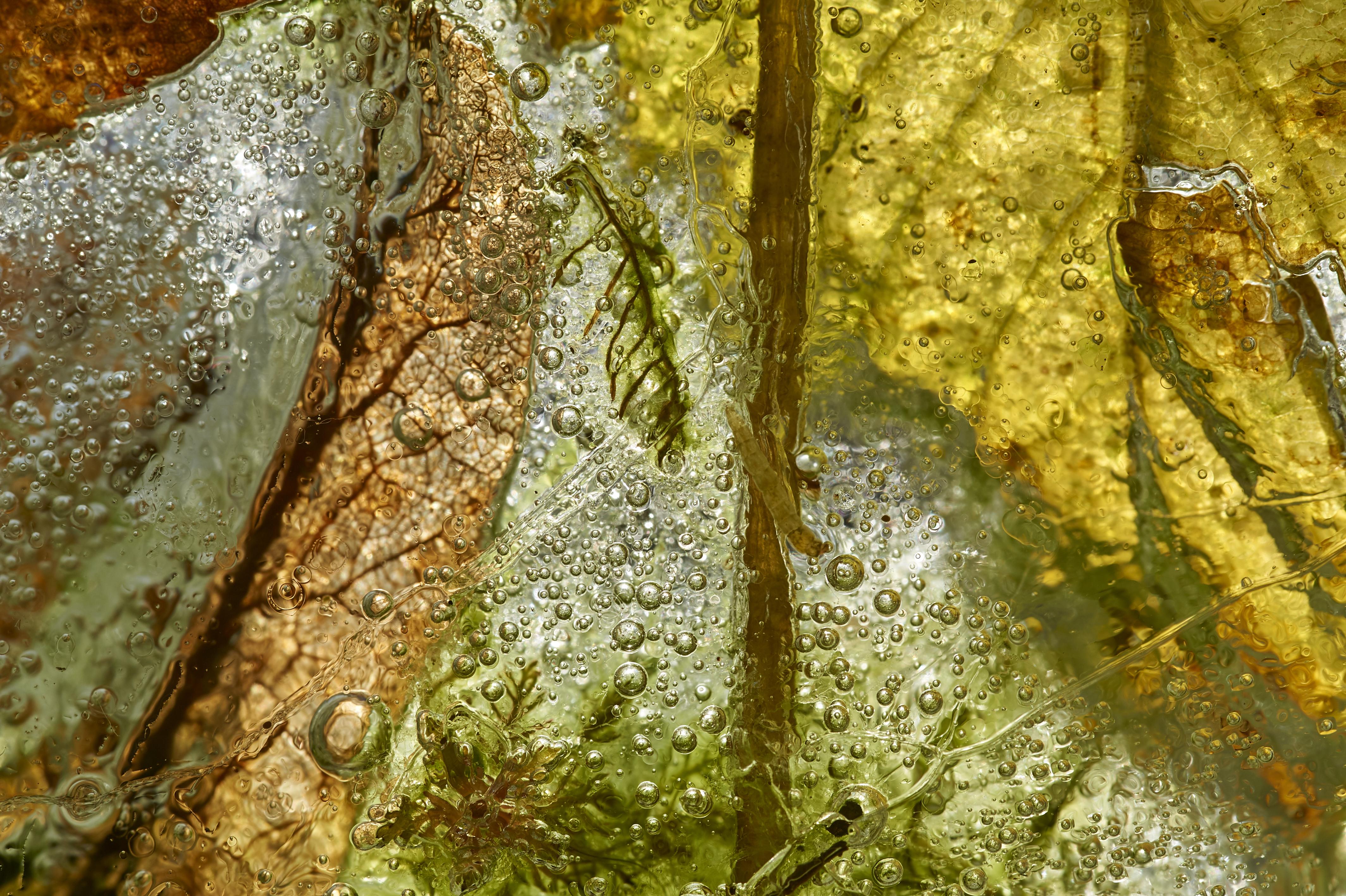 Glace et chlorophylle