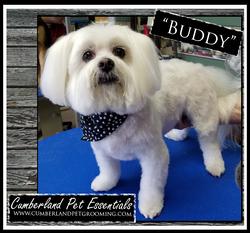 Buddy Cute Dog