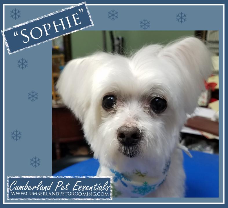 Sophie cute dog