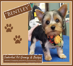Bentley cute dog