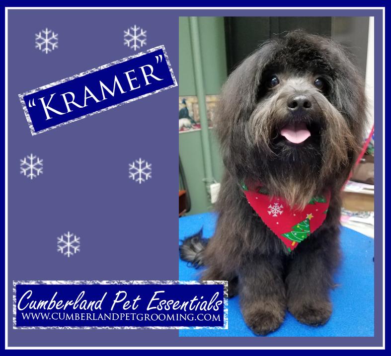 Kramer pretty dog