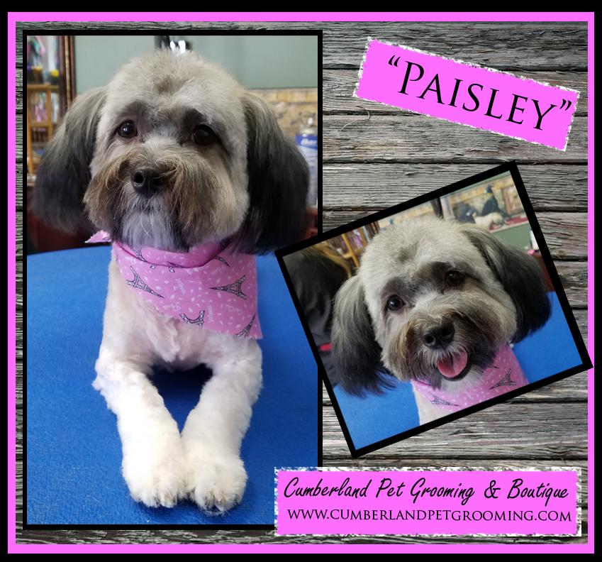 Paisley pretty dog