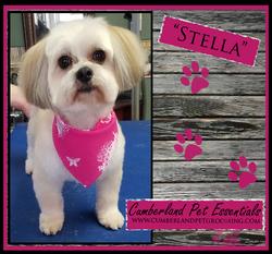 Stella cute dog