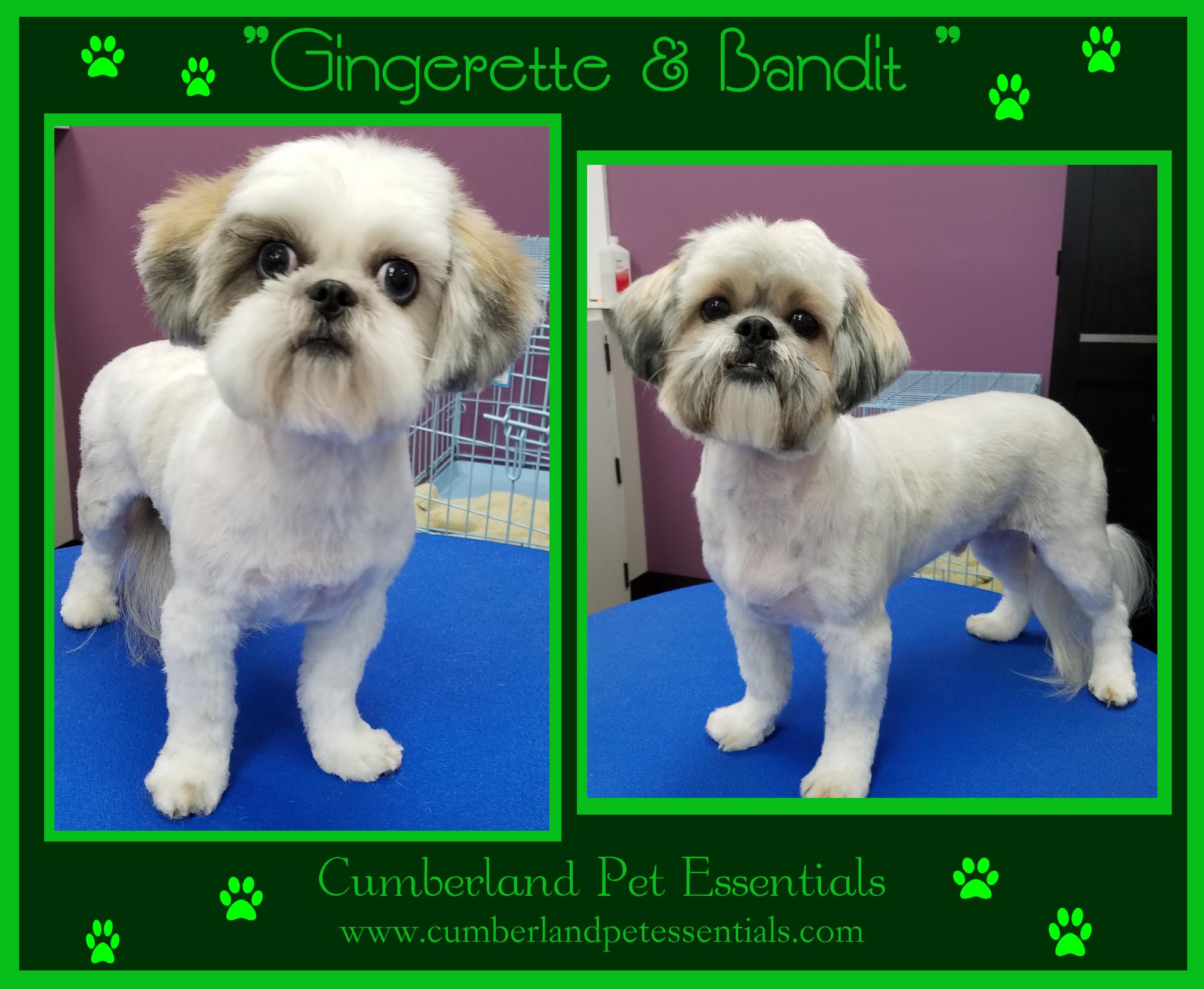 Gingerette and Bandit