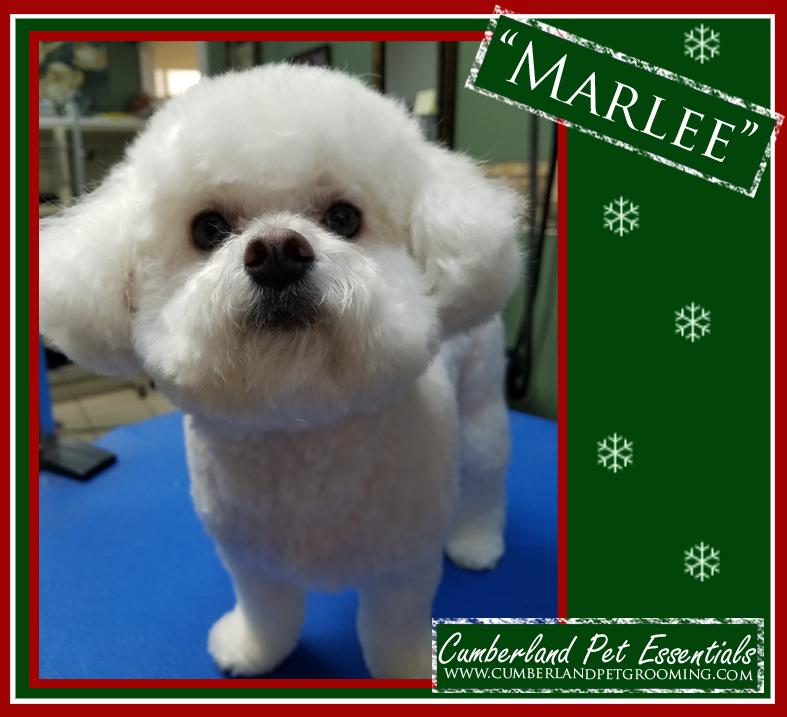 Marlee fluffy dog