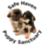 safe haven.png