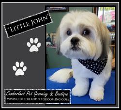 Little John groomed dog