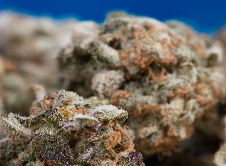 New York governor signs law decriminalizing marijuana use