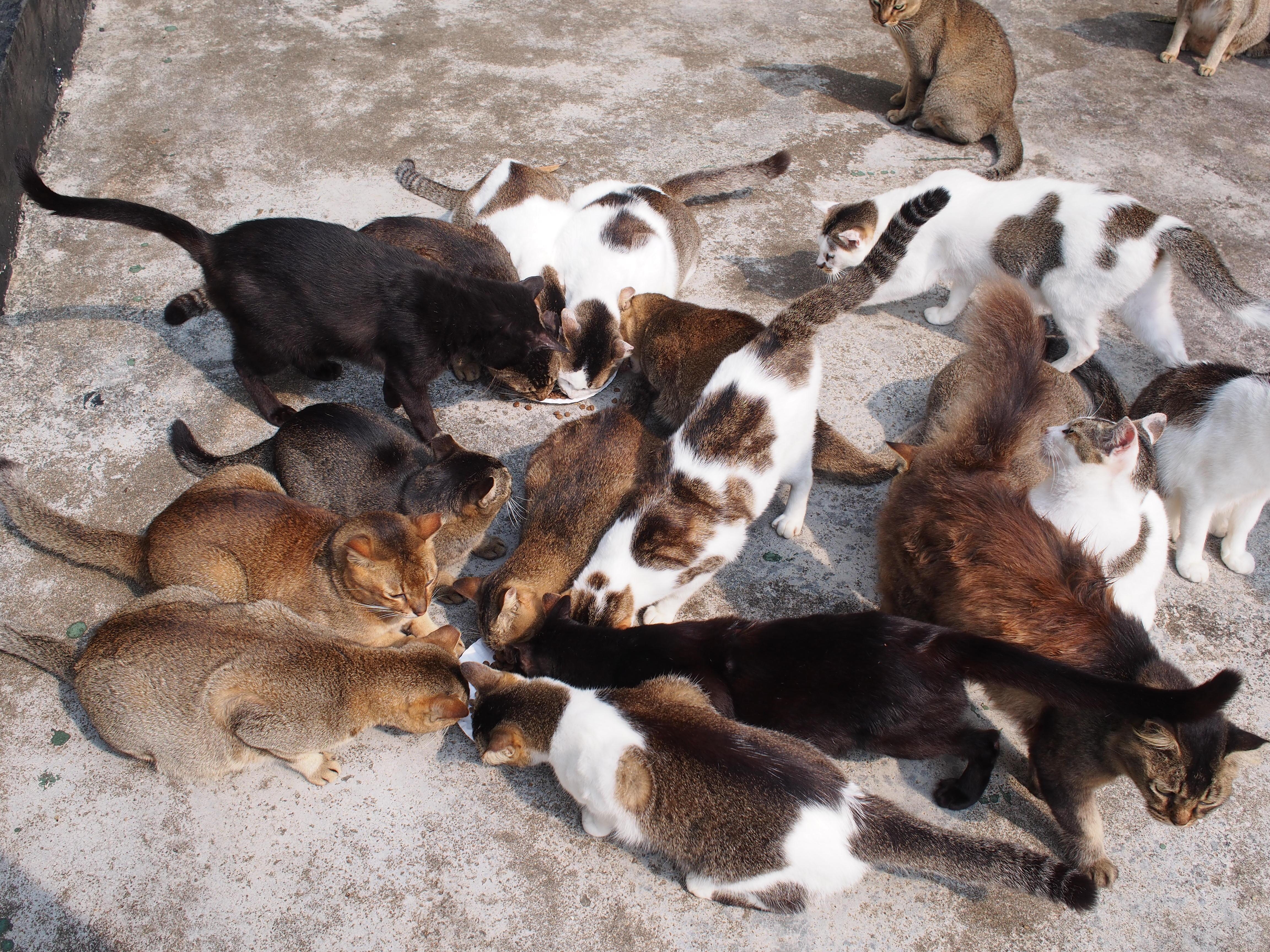St Johnin saaren kissoja