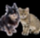 診療対象動物 .png