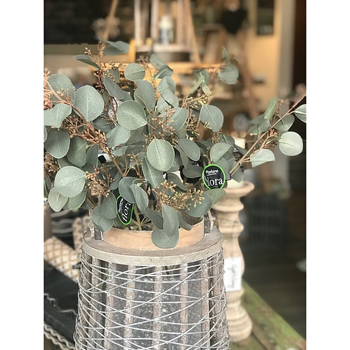 EUCALYPTUS LEAVES SPRAY