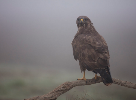 Five Mountain Birds You Need to Know