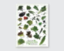 Gourmet Greens Guatemala product poster in spanish and english designed by Green Flamingo Design