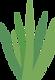 Aloe Vera Plant graphic