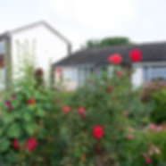 House with rose bushes in the front yard by the london airport by Patricia Maldonado for Green Flamingo Design