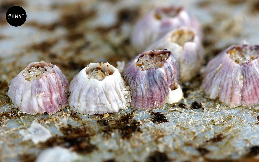 Hotel marketing: Barnacles