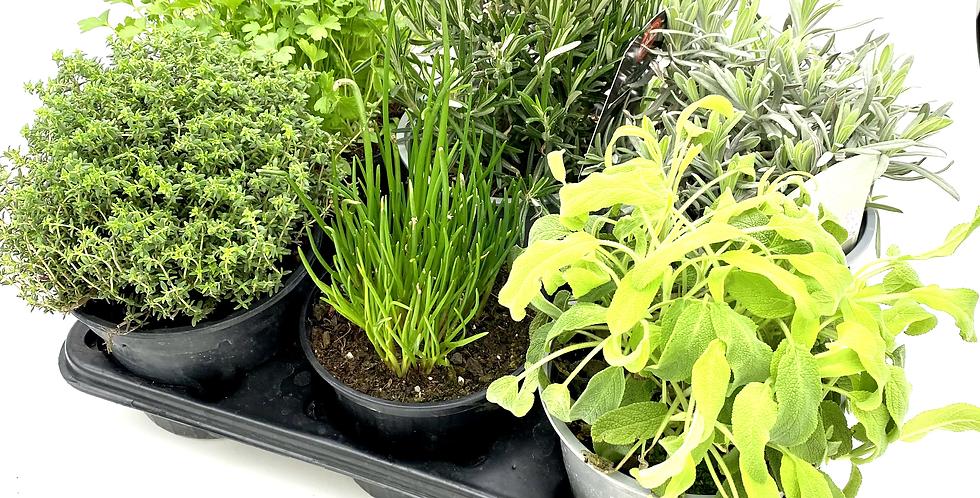 Gartenkräuter Mix