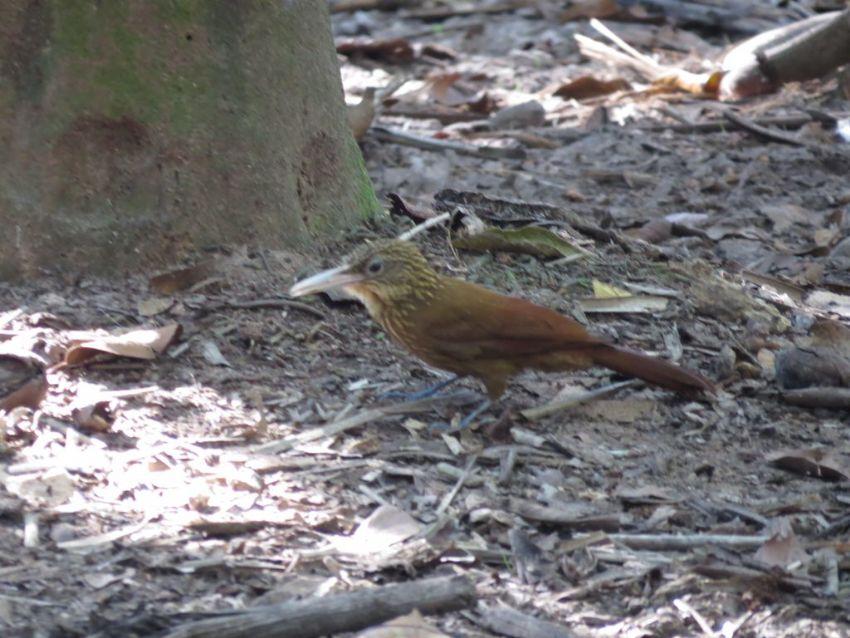 bird-02-wildlife-pantanal-tours