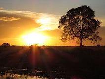 Landscape - beautiful sunset at Pantanal