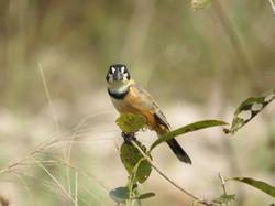 bird-03-wildlife-pantanal-tours