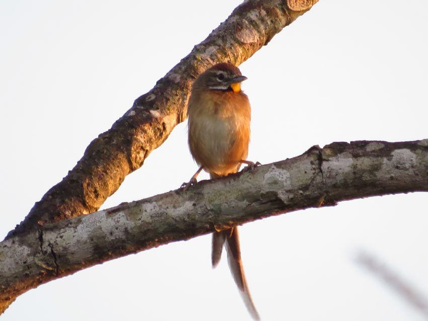 bird-01-wildlife-pantanal-tours