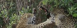 slideshow05-wildlife-pantanal-tours