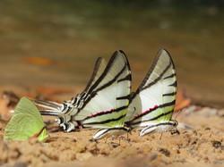 amp-IMG_2882.JPGchapada-07-butterflies-wildlife-pantanal-tours