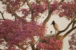 bird-jabiru-stork-01-wildlife-pantanal-tours
