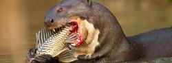 slideshow01-wildlife-pantanal-tours