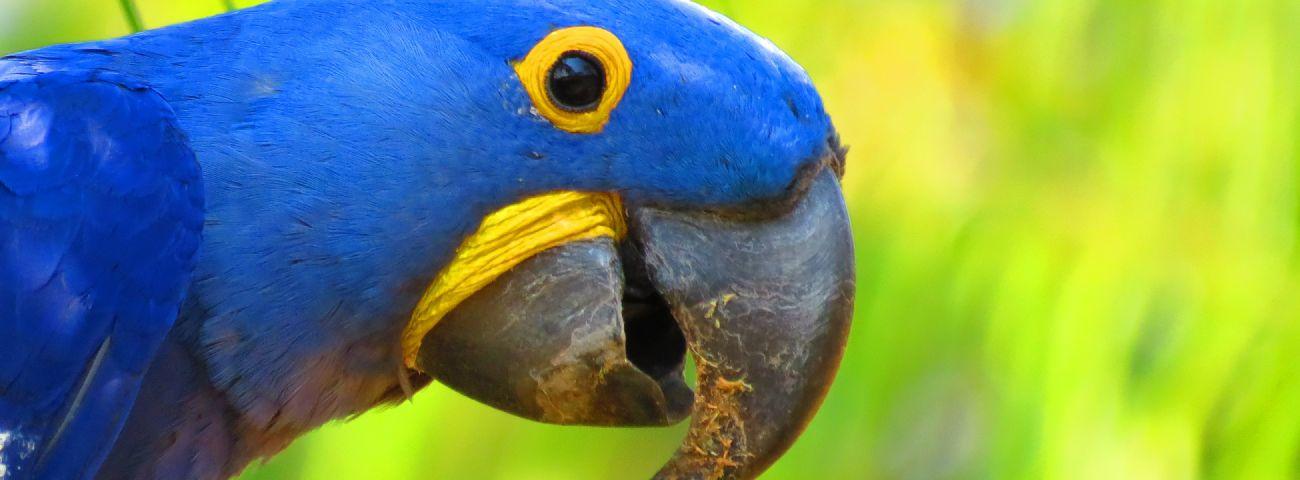 slideshow02-wildlife-pantanal-tours