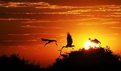 Sunset - Wildlife Pantanal Tours