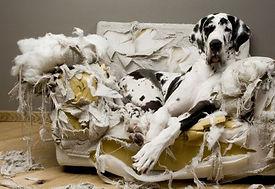 destrutividade-comportamento-animal
