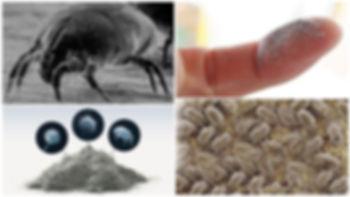 parazity-v-pyli