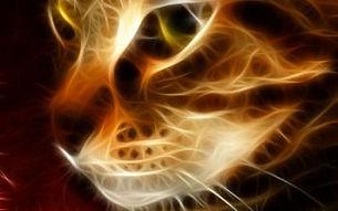 espiritualidade-animais