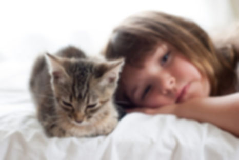 kitten-and-baby-conflict-1.jpg