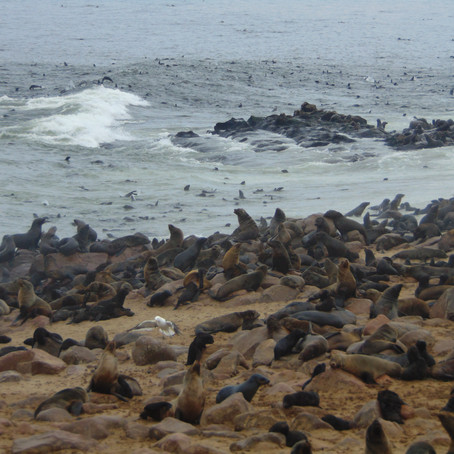 Cape Cross Seal Colony - An Epic Rookery