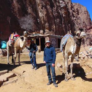 To Summit Mount Sinai...