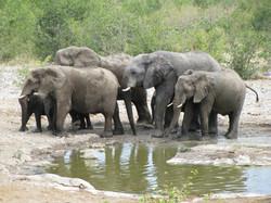 Elefant watching